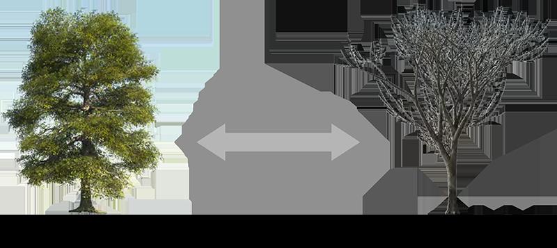 Agentenorientierte Flora