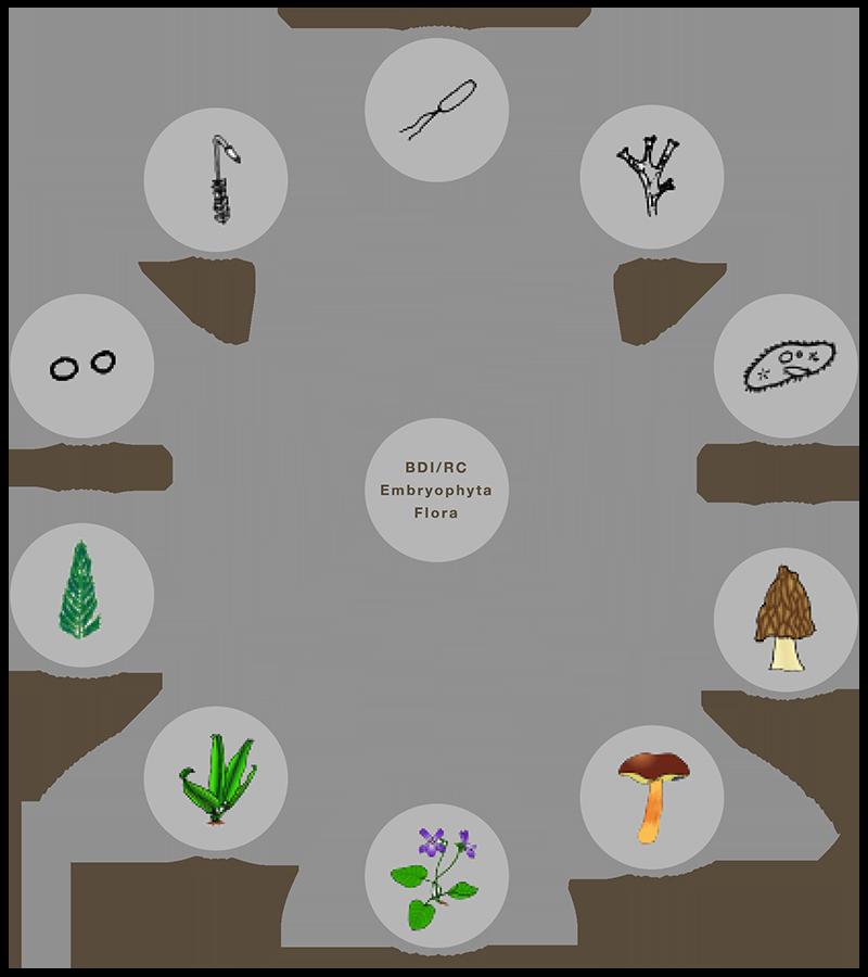 Antarianische Floraklassen